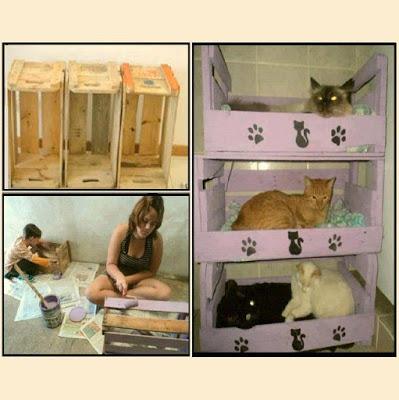 Cama para gatos reptifilm for Cama para gatos